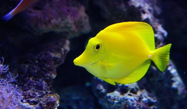 Welcher fisch ist das facebook als kollaborationstool for Fisch bilder